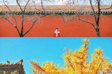 故宫600年| 柿子红了 银杏黄了