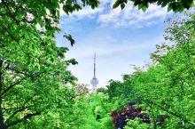 北京必去公园:玉渊潭公园