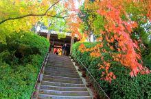 大兴善寺的秋色!