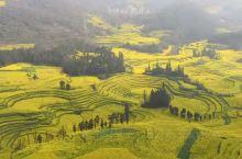 云南:罗平金鸡峰丛和螺丝田油菜花海