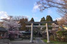 日本秋田市,千秋公园,赏樱花的好地方