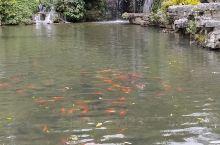 有山有水又有鱼