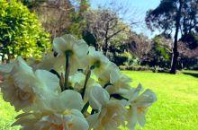 鲜花💐沐浴着阳光