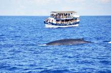 在南极、加拿大都观过鯨,在斯里兰卡观鯨,又有不同的感受