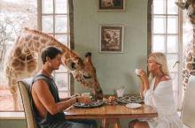 肯尼亚Manor长颈鹿庄园!必去