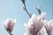 春日赏花|瑞士日内瓦|赏花攻略