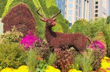 北京的国庆节,景色美不美。…………………………………………………………………………………………………