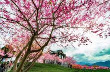 台品樱花园