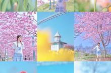 成都五个宝藏赏花拍照地|一起去看花花世界