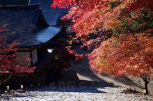日本京都追枫第一站~~高雄山神户寺