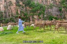秦皇岛露营🏕️ 喂小鹿🦌|||1⃣️