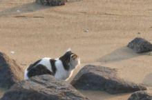 愛看夕阳,野猫!