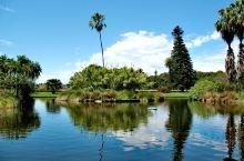 必打卡的悉尼金牌景点,悉尼皇家植物园。