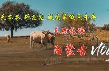 天然牧场内蒙古Vlog