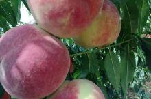 乳山的蜜桃