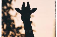 坦桑尼亚|Safari我们需要准备什么
