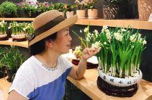 在崇明举办的第十届花博会结束前,去打卡了,崇明水仙花好香