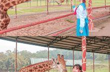 重庆周边梦幻主题游乐园 还能喂长颈鹿超棒