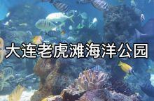 国庆出游好去处—大连老虎滩海洋公园