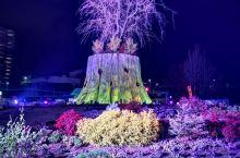 香椎花園,圣夜之光