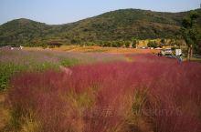 10月来拈花湾看漫山遍野的花……