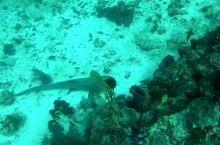 罗达拉木湾潜水