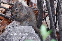 九山顶的小松鼠