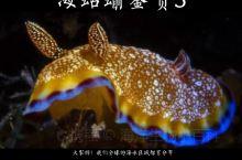海蛞蝓鉴赏3