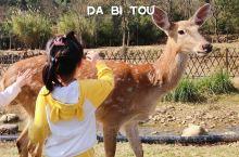 开学前狂欢|无限亲近小鹿,带上孩子度假去