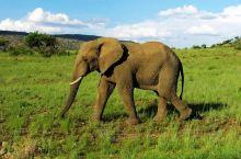 南非第四大野生动物园