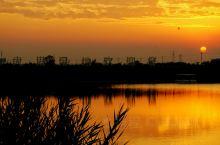 南大港湿地看芦苇荡