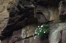 峭壁上的花,虽然没有土壤,也坚强地活着