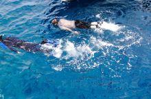 沙特阿拉伯红海海底,湛蓝清澈,潜水者最爱