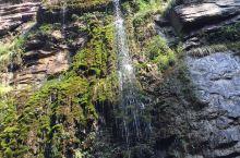 长在悬崖峭壁上的苔藓
