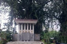 位于万隆的印尼国家铁路公司总部,园内多株参天大树,可能有榕树吧。