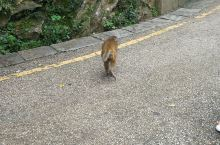 小猴子一只。。。。。。。。