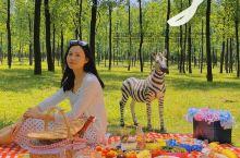 南昌周边游野餐露营地|厚田乡东洲村小树林