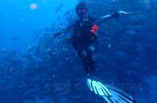 菲律宾薄荷岛潜水