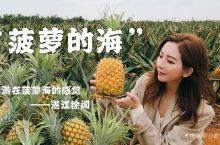 """徐闻菠萝又火了?来湛江看""""菠萝的海""""吧~"""