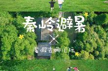 暑假去哪儿玩丨秦岭避暑开启惬意带娃模式