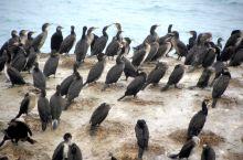 打卡大西北的鸟类王国——青海湖鸟岛。