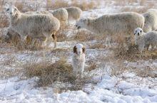 草原上的冬
