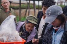 最近都在香格里拉拍摄#松茸# #购买# 松茸纪录短片,每年在雨季7-8月份都是菌子集中出来季节,除了