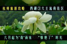 """杭州,为""""荷""""而来,""""惊艳了""""时光"""