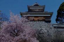 """熊本城(くまもとじょう)位于日本熊本县熊本市中央区,别名银杏城,是日本著名景点之一,""""熊本城迹""""被指"""