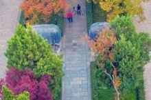 """南京的秋天""""枫了"""""""