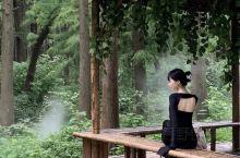 泰州兴化/绿野仙踪🍃水上森林公园