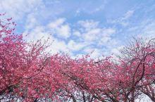 爱丁堡的春风十里