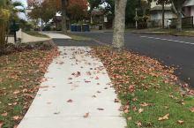 铺满落叶🍂🍃的秋天