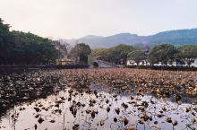 每年一次的普陀山拜拜。从上海坐直通车到朱家尖吴淞峙码头,然后坐船上普陀山。去程还算顺利,回程是周日中